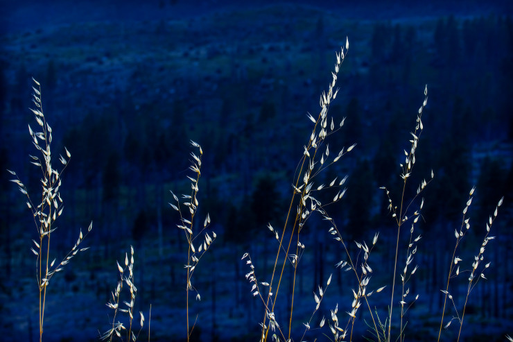 Top 10 Night Poems silver grass against night sky